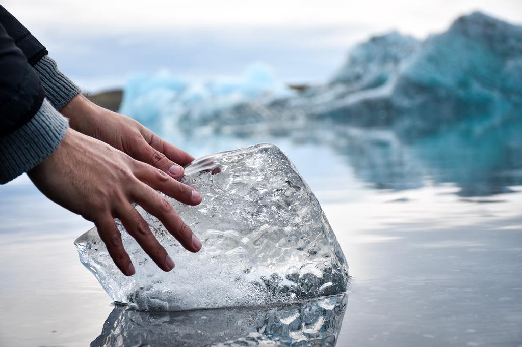 Curiosidades: A região onde está em contato com o gelo fica com um tom de rosa.