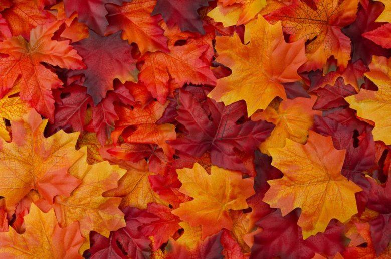 Folhas ao chão referentes ao outonooutono