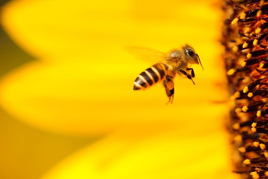 mel e própolis