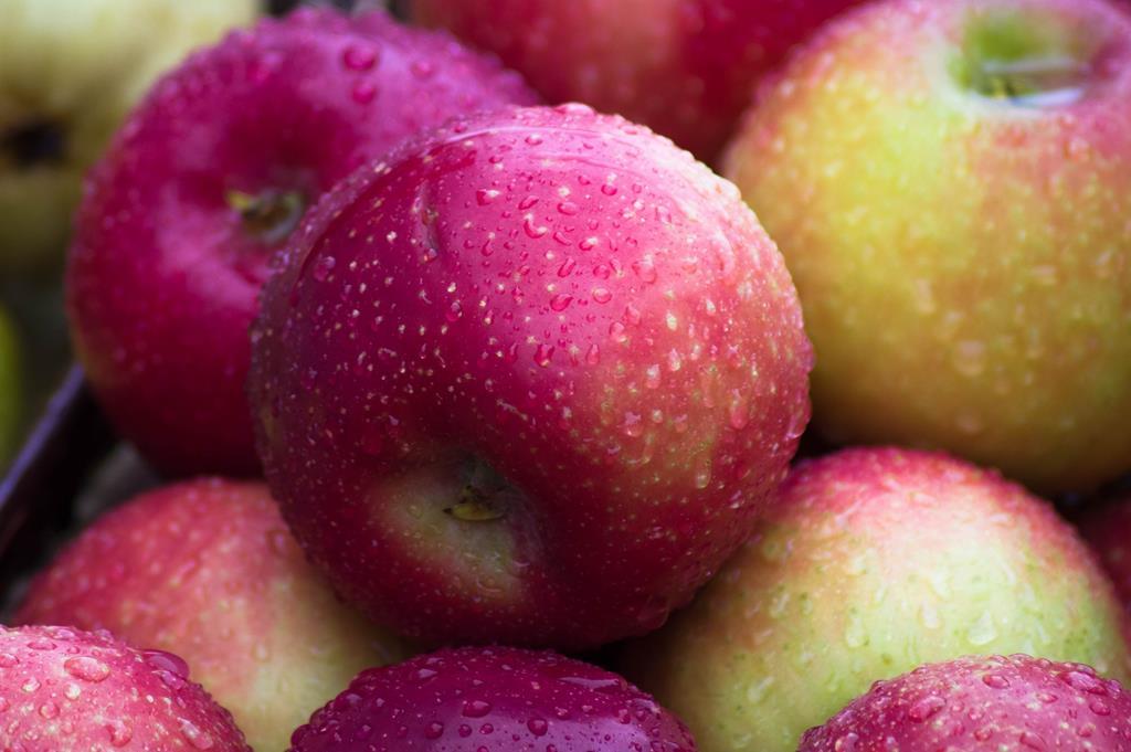 a maçã é uma das frutas mais conhecidas por prender o intestino, e deve ser oferecida intercalada com outros alimentos para não interferir no trânsito intestinal
