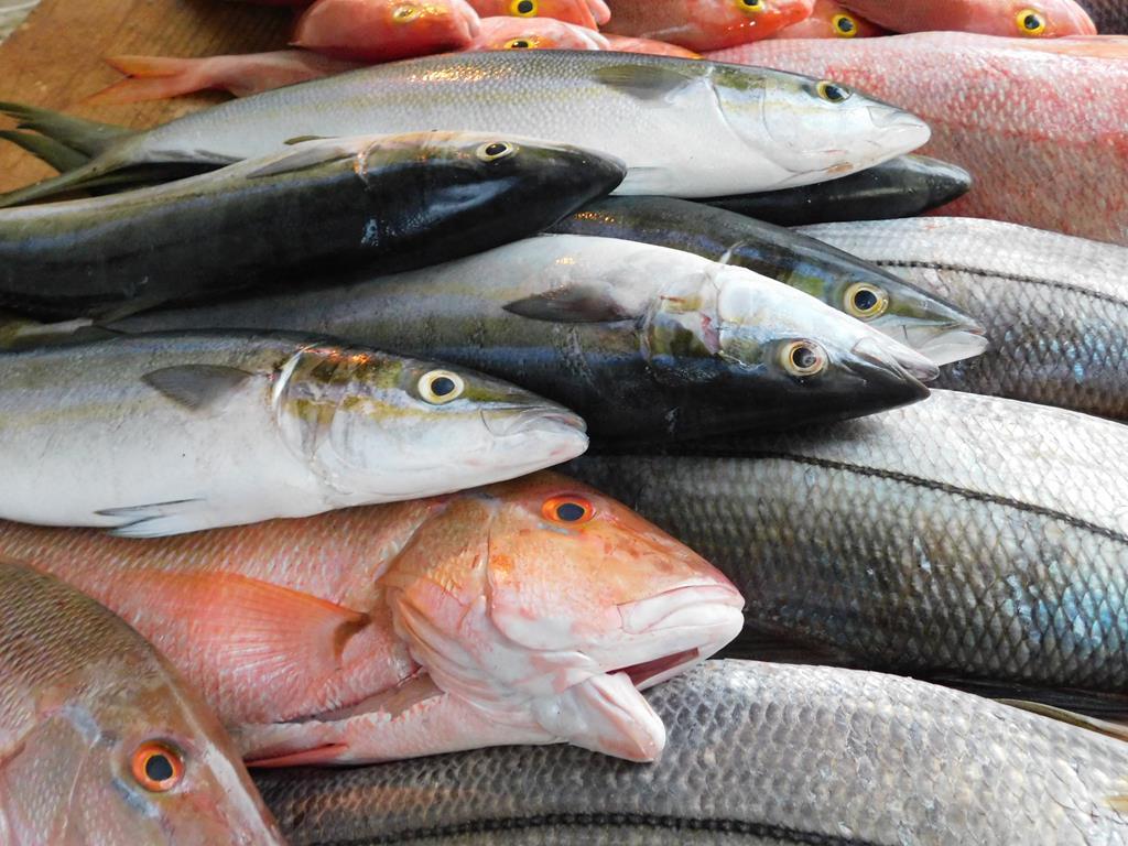 os peixes conseguem absorver e reter metais pesados em seus órgãos e tecidos, incluindo a pele
