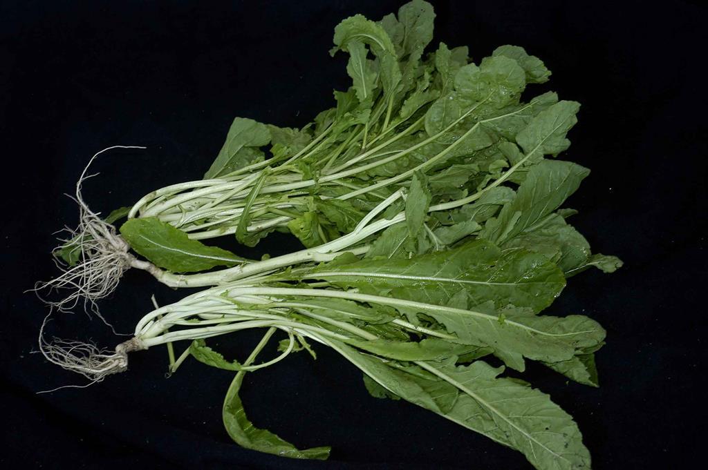 Uma xícara de folhas de rúcula oferecem pode ter até 120 mg de vitamina C